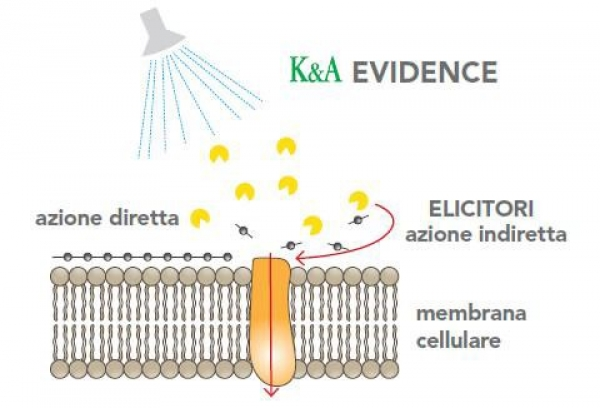 K&A Evidence: fortificare le difese naturali